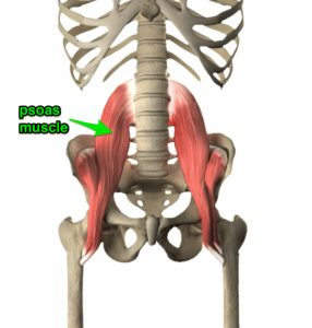 Cycling-Lower-Back-Pain-Psoas-Muscle